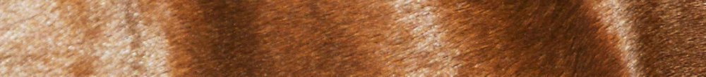 Banner Zorrete huid